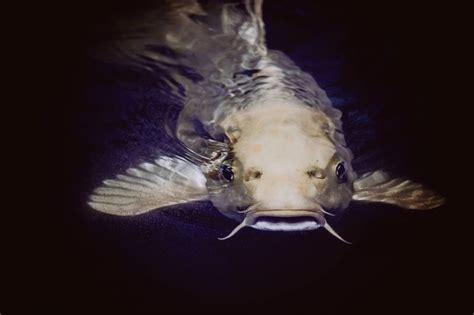 Makanan Ikan Hias Nemo 100 gambar ikan segala jenis kartun hias air laut