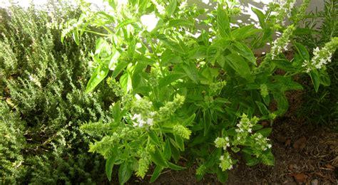 herb garden home herb gardens