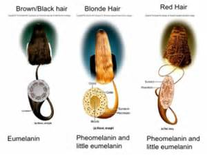 what determines hair color research the chemistry hair dyes