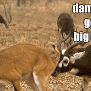 Oh Deer Meme - oh deer thats nasty by snajath meme center