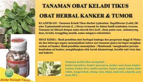 Obat Herbal Keladi Tikus obat herbal keladi tikus typhonium flagelliforme