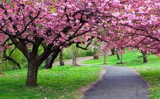 pretty spring pictures beautiful spring flowering tree wallpapers and images