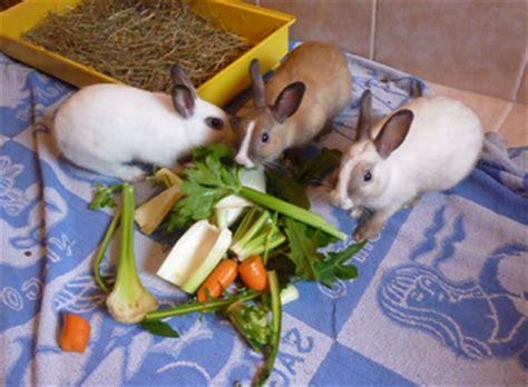 alimentazione dei conigli alimentazione coniglio