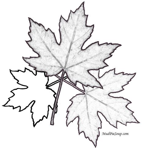 printable images of fall leaves 5 best images of free printable fall leaves to color