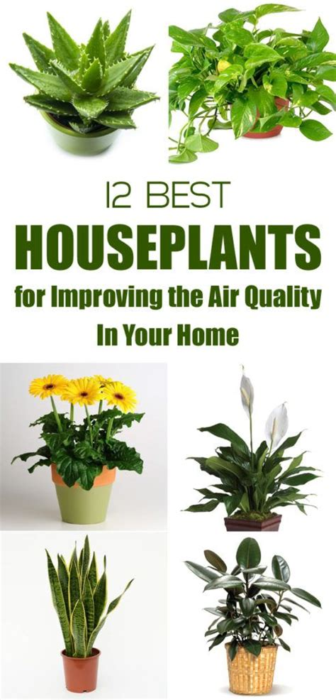 best houseplants for air quality best 20 indoor air quality ideas on pinterest air