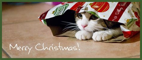 weihnachten in einer berghütte frohe weihnachten mit einer katze feiern yorbay herzlich