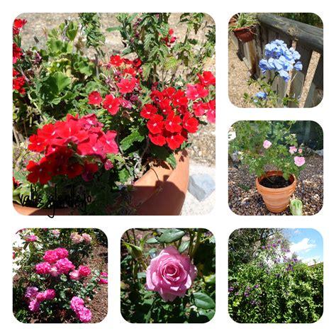 indoor flowering plants no sunlight indoor flower plants low light indoor flowering plants no