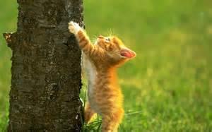 Cute-<strong>Kitten</strong>-<strong>kittens</strong>-16096778-1280-800.jpg