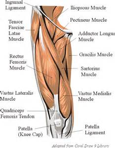 Images of Thigh Muscle Fatigue
