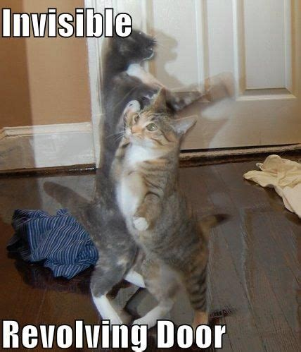 Invisible Cat Meme - the free information society invisible revolving door