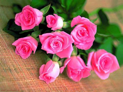 immagine dei fiori l enciclopedia dei fiori il sito dei fiori