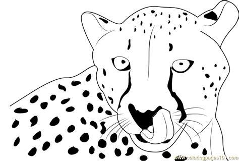 cheetah face coloring page cheetah face coloring page free cheetah coloring pages