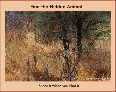 Find In The Picture Riddle Find The Animal In The Forest
