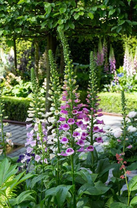 garden tour a small garden design with a