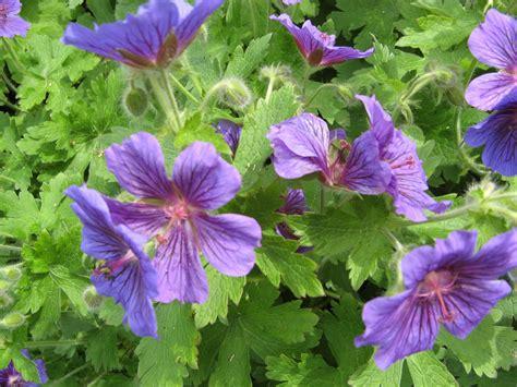 barnhill rock garden broughty ferry photos plants