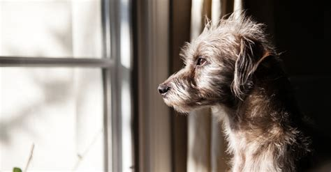 how to treat anxiety in dogs lovable dogs how to stop separation anxiety in dogs lovable dogs