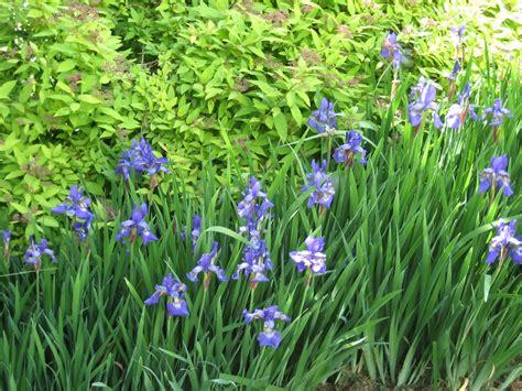 may 2013 uconnladybug s blog