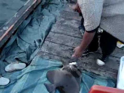 Pancing Fisherman fishing pancing bawal telinga gajah doovi