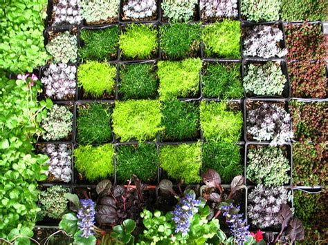 Vertical Wall Garden Diy Diy Gardening How To Create A Vertical Wall Garden