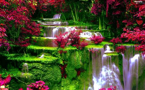 beautiful waterfalls with flowers vegetation waterfall flowers beautiful views wallpapers 1920x1200