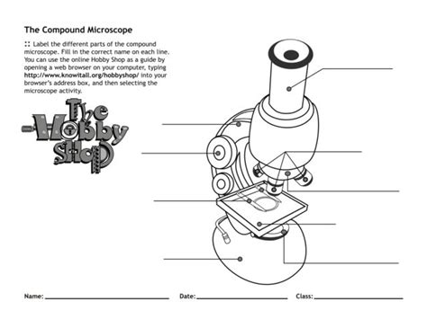using a microscope worksheet the compound microscope worksheet worksheets ratchasima