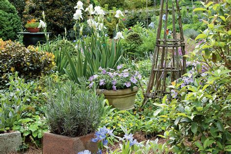 Japanese Container Garden - variegated agave lavender amp japanese roof iris spectacular container gardening ideas