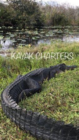 boat charters cape coral fl kayak charters cape coral fl top tips before you go