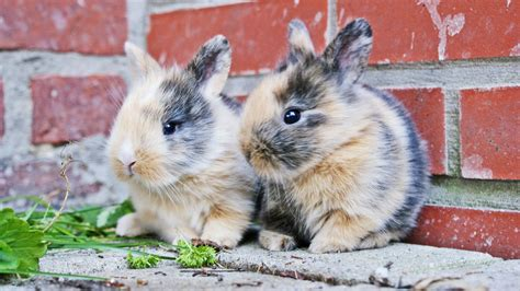 What Is Checked During A Background Check Free Rabbit Health Checks During Rabbit Awareness Month