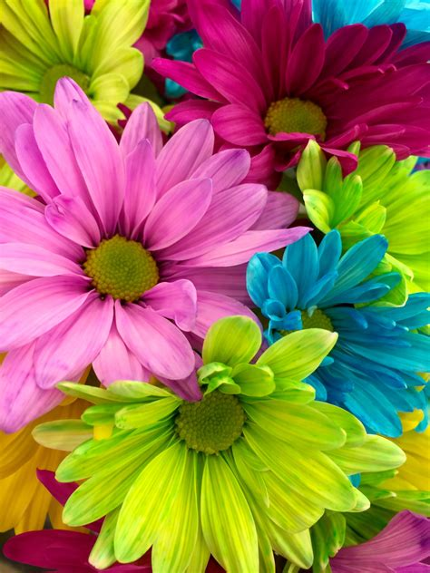 Picture Flowers pink yellow petaled flower in up 183 free