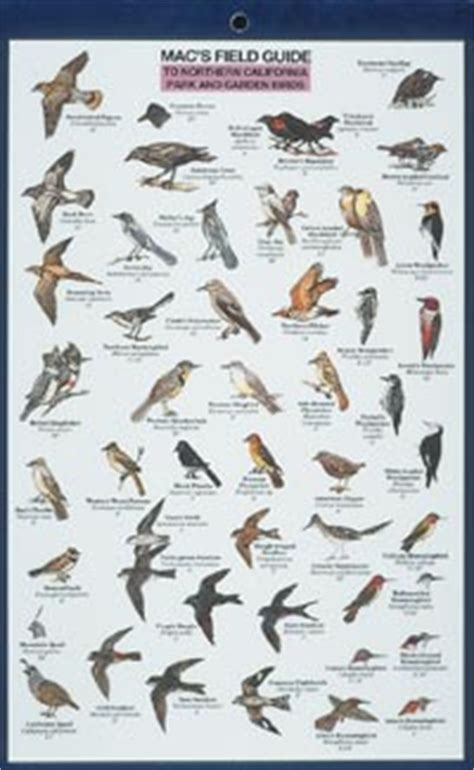 birds of california identification guide pictures to pin