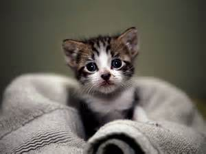 small+cat.jpg