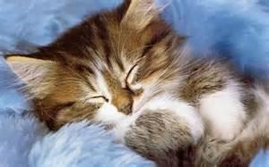 Cute-<strong>Kitten</strong>-<strong>kittens</strong>-16122136-1280-800.jpg