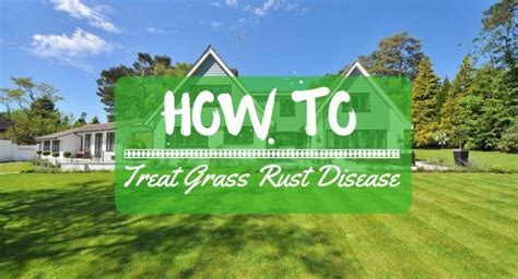 how to get rid of grass rust fungus how to treat grass rust disease my greenery