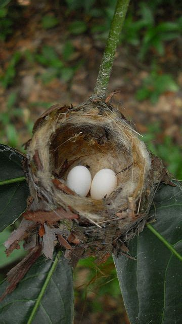 heat l for hummingbirds 20 best images about bird nests of northern america on