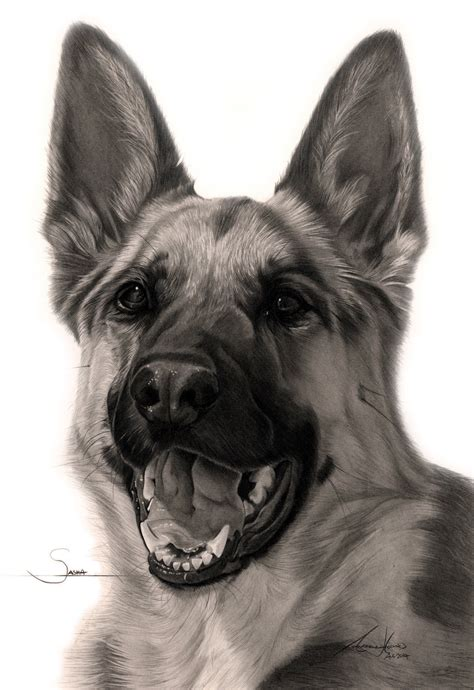 commission sasha the german shepherd by captured in