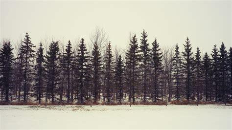 imagenes de invierno tumblr viviendo en nuestro cuento blog literario diciembre 2015