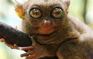 Endangered animals in the rainforest top 6 endangered animals