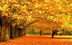 File name 797616 more beautiful fall wallpaper flgrx graphics