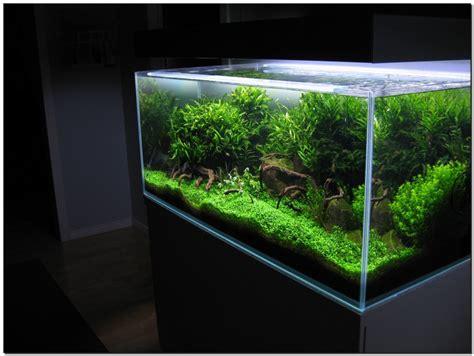 aquascaping techniques beautiful home aquarium interior home design