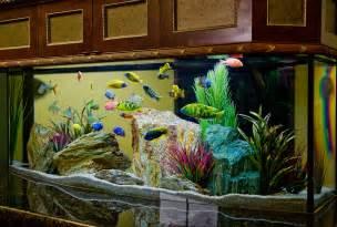 aquarium design ideas stress free freshwater aquarium fish fifty100 com