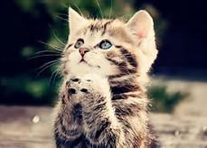 Cute Animals Saying Please