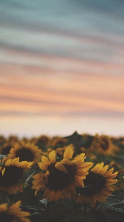 sunflower wallpaper tumblr