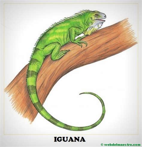 imagenes animadas de iguanas dibujos de animales salvajes para imprimir web del maestro