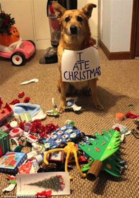 christmas gifts for dogs uk
