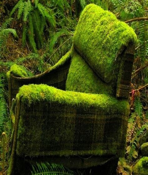 mossy green green moss chair gardening pinterest