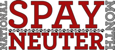 benefits of spaying a february is national spay neuter month what you need to the spot