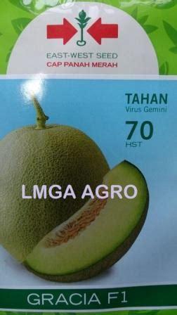 Benih Panah Merah Melon Gracia by Lmga Agro Jual Produk Pertanian Harga Murah Dan
