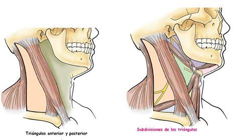 cuales son las cadenas ganglionares del cuello semiolog 237 a quir 250 rgica el cuello y su exploraci 211 n