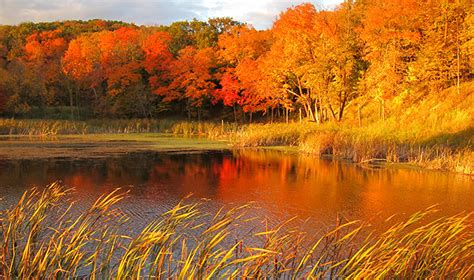 in fall dnr predicts spectacular fall color season news releases