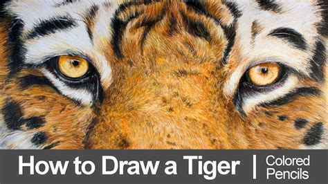 how to draw with colored pencils draw a tiger with colored pencils